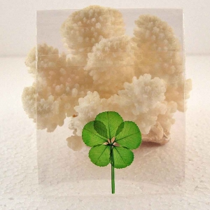 5-leaf Clover in Cello Sleeve