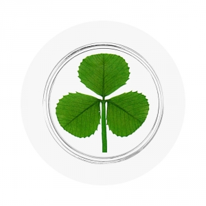 Shamrock Good Luck Pocket Token