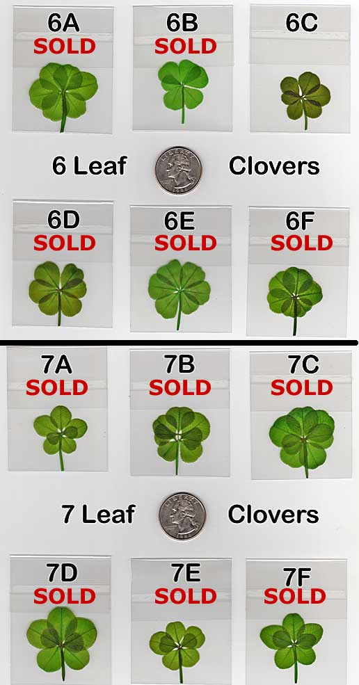 To order, please complete the Online Information Form. with the item: www.fourleafclover.com/vshop/6_and_7_leaf_clovers