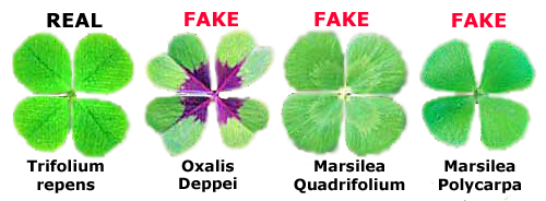 Facts About Four Leaf Clovers
