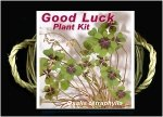 good luck plant kit