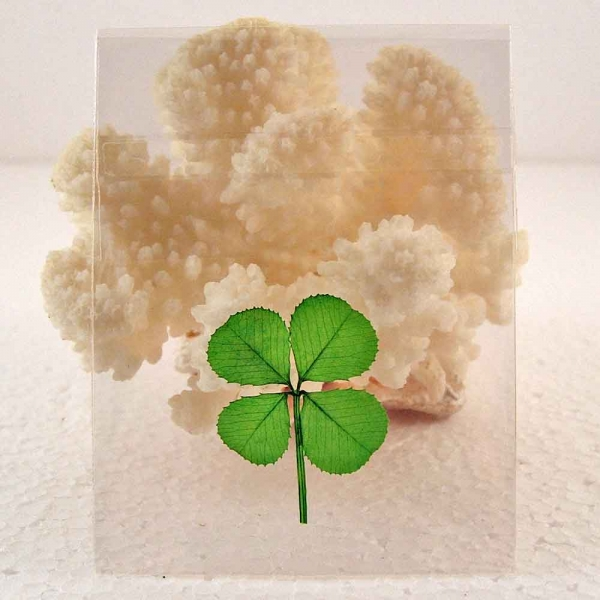 Pressed And Preserved Four Leaf Clover In Cello Sleeve